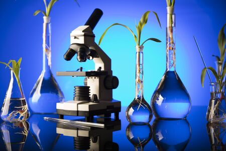Biotechnology and floral science theme. Experimenting with flora in laboratory. Blue background. Stock Photo