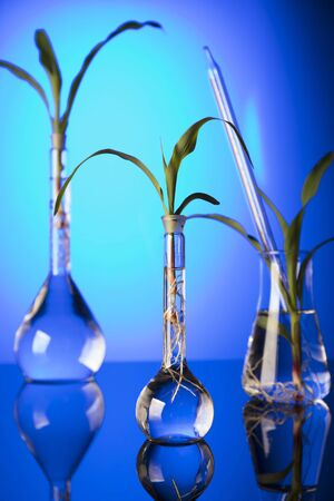 Biotechnology and floral science theme. Experimenting with flora in laboratory. Blue background. Stok Fotoğraf