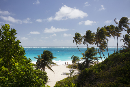 Summer. Exotic vacations. Palm trees. Turquoise water. Sunny blue sky. Beautiful white-sand beach. Thumb a lift.