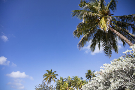 Summer on Barbados Island. Exotic vacations. Palm trees. Turquoise water. Sunny blue sky.