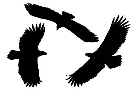 Silhouettes of the sea eagles