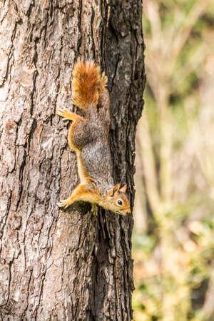 Squirrel on ground. Squirrel nature view. Squirrel portrait. Squirrel funny