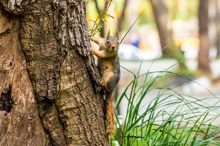 Squirrel on ground. Squirrel nature view. Squirrel portrait. Squirrel funny Imagens