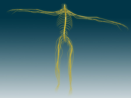 Conceptual image of human nervous system.