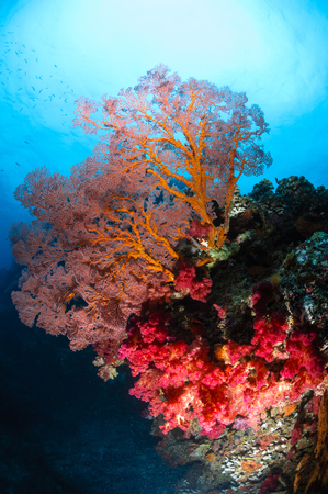 Soft coral and sea fan, Fiji. LANG_EVOIMAGES