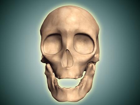 nasal: Conceptual image of human skull, front view.