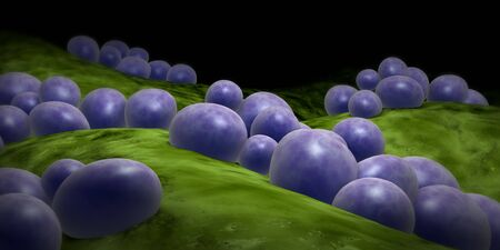 Microscopic view of staphylococcus. LANG_EVOIMAGES