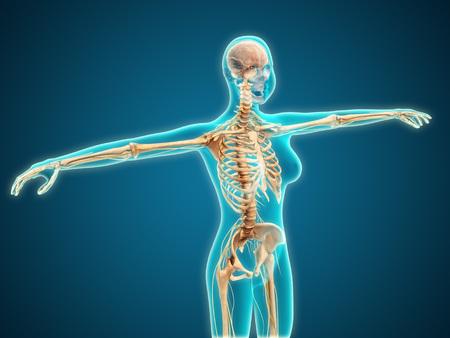 Vista de rayos X del cuerpo femenino que muestra el sistema esquelético.