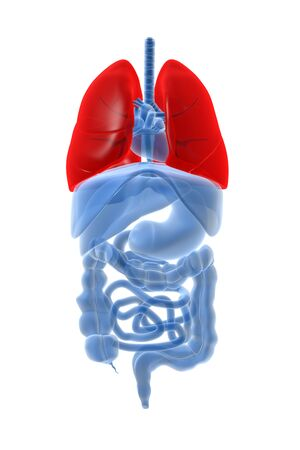 X-ray image of internal organs with lungs highlighted in red.