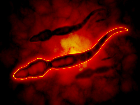 sexual anatomy: Microscopic view of male sperm cells.