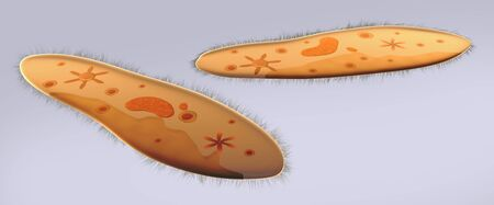 Microscopic view of paramecium. LANG_EVOIMAGES