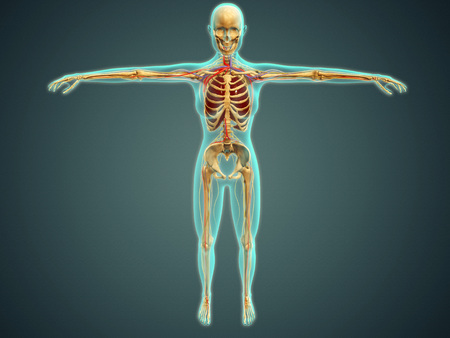 Medical illustration of human body showing skeletal system, arteries, veins, and nervous system.