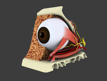 Conceptual image of human eye anatomy.
