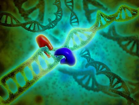 hidrógeno: Vista microscópica de la unión del ADN.