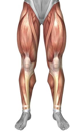 Four Human Legs Diagram - Wiring Circuit •