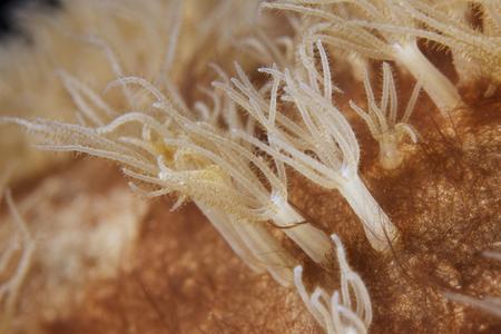 Small polyps feeding, Bonaire, Caribbean Netherlands.