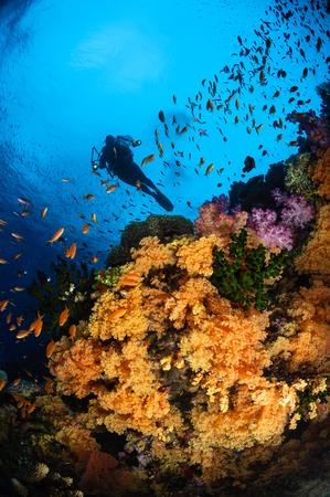 Diver and soft coral, Fiji. LANG_EVOIMAGES