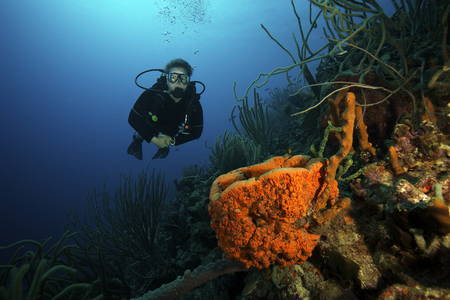 Scuba diver swimming underwater amongst sea sponges, Bonaire, Caribbean Netherlands. LANG_EVOIMAGES