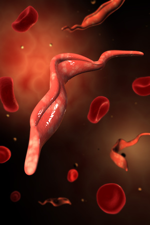 corpuscles: Conceptual image of Trypanosoma.