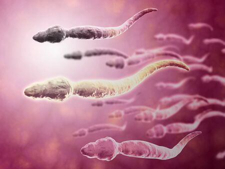 sexual anatomy: Microscopic view of sperm traveling towards egg.