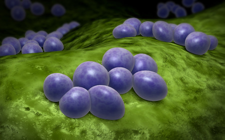 acquired: Microscopic view of staphylococcus. LANG_EVOIMAGES