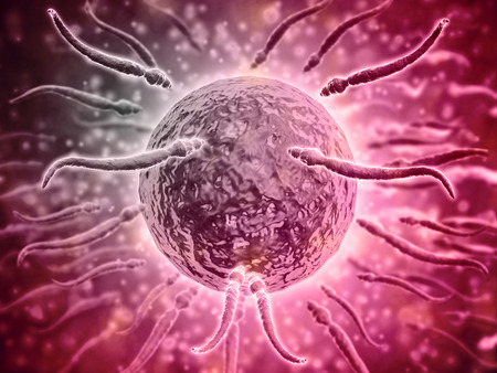 sexual anatomy: Microscopic view of sperm swimming towards egg.