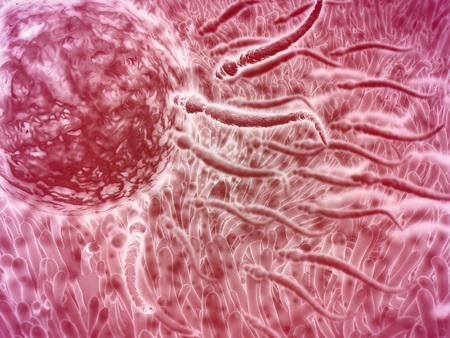 embryogenesis: Sperm traveling towards egg with cellia.