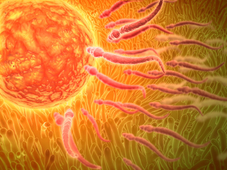 sexual anatomy: Sperm traveling towards egg with cellia.