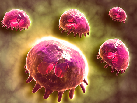 Microscopic view of phagocytic macrophages, which are involved in the immune response within the body.