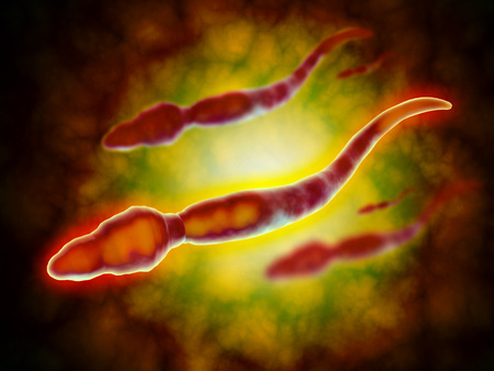 sexual anatomy: Microscopic view of a male sperm cell.