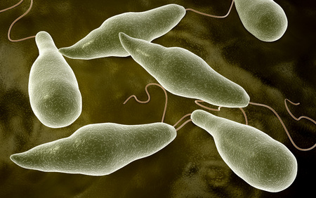 eukaryotic: Conceptual image of Euglena. LANG_EVOIMAGES