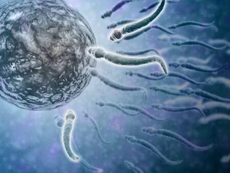 spermatozoon: Microscopic view of sperm swimming towards egg.