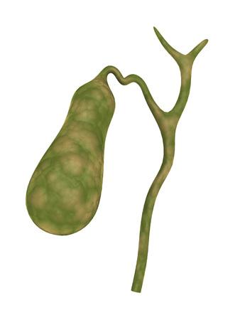 Conceptual image of human gall bladder.