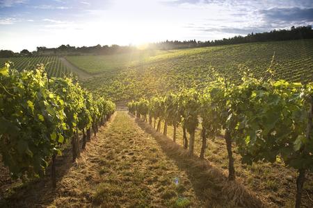 トスカーナの丘やキャンティのブドウ園の風景