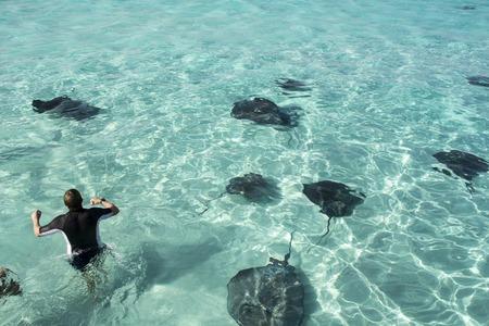 manta fish in a beautiful caribbean sea photo