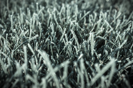 Autumn photo of first freezing day with degree below zero. Frost on a green lawn taken one cold october morning. Stock Photo