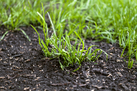 Growing up grass seeds Stockfoto