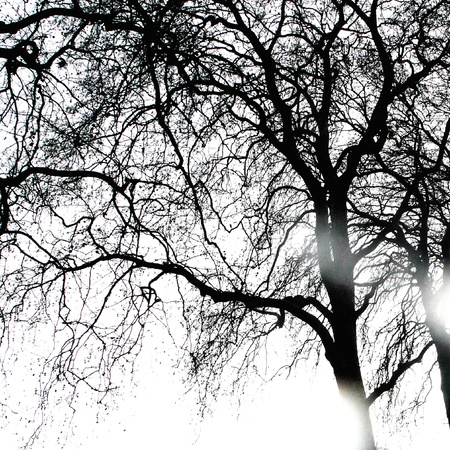 Sun rays coming through winter tree, black and white photo