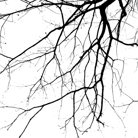 Closeup shot of an ancient tree in black and white, silhouette.