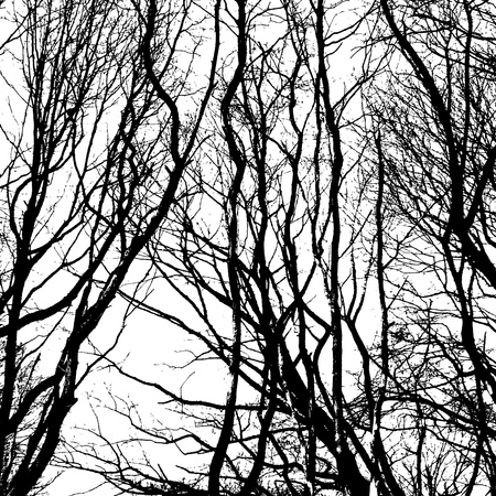 Bare wintry trees in black and white photo