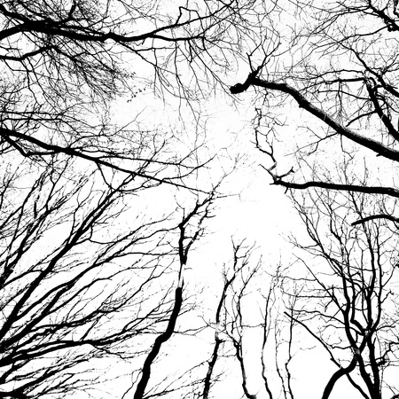 Silhouette of an ancient trees in black and white photo