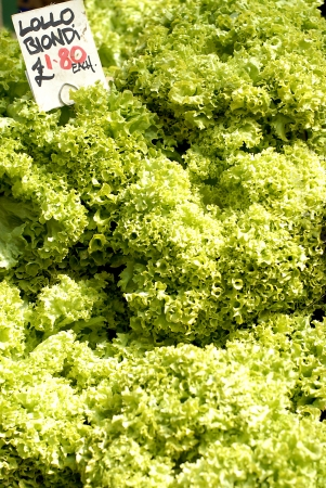 priced: Fresh salad lettuce for sale priced at 1.80 euro each