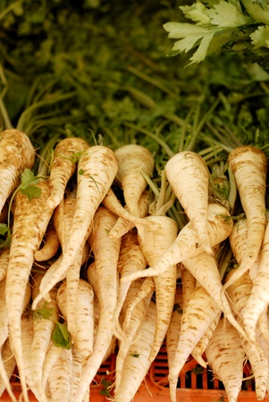 rooted: Whole raw parsnips for sale in a marketplace