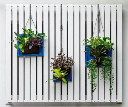 Vertical garden 写真素材