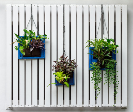 Vertical garden 스톡 콘텐츠