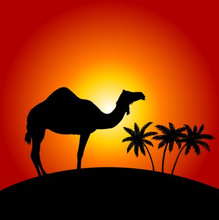 sand dune: Silhouette of camel on the sunset background
