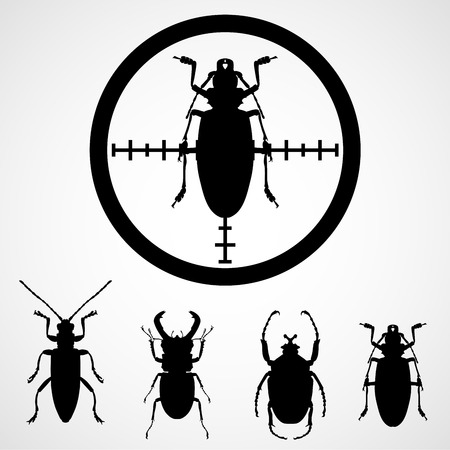 Bug in crosshair  - insect insecticide, cockroach on target