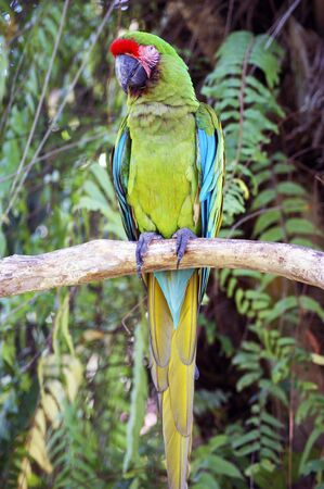 ararauna: A portrait of green parrot ara. Stock Photo