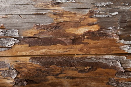 Plank Background, Grunge wooden background. Wood Texture. Stock Photo - 10284672