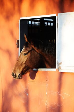 horse stable: portrait of a horse in stable